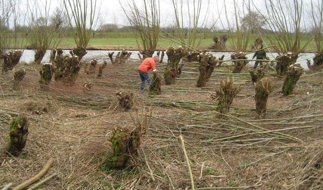 afbeelding boswerkzaamheden