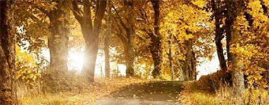 Vriendennieuws herfst